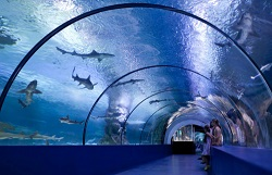 PMMA Sheets Used to Build Aquariums