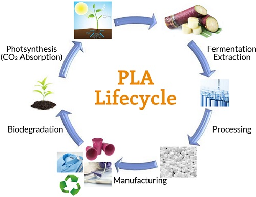Polylactides (PLA) Lifecycle